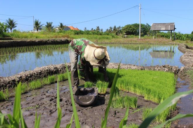 Rice Farming, Bali
