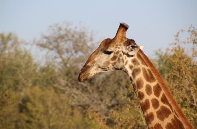 Sabi Sabi South Africa