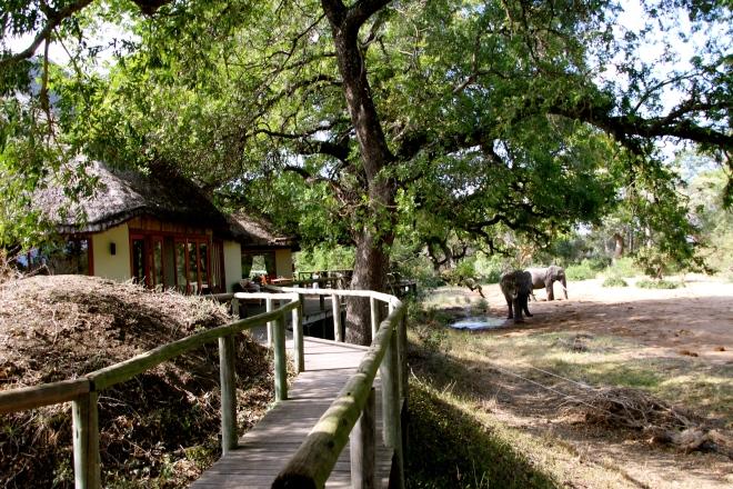 Tintswalo Lodge, Mayeleti