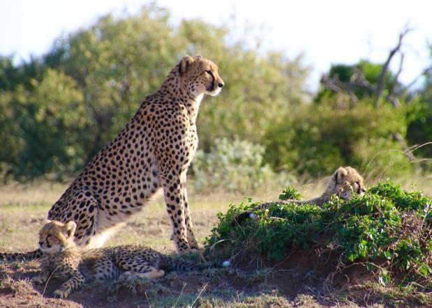 What to Expect on Safari in Maasai Mara,Kenya