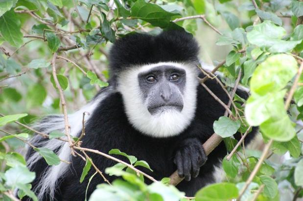 What to Expect on Safari at MountKenya